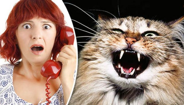 funny-time-wasting-999-calls-hissing-cat-metropolitan-police-Scotland-yard-745120-640x364